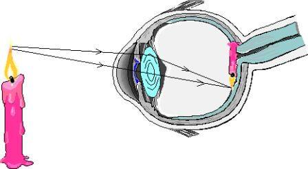 عدسی چشم Crystalline lens